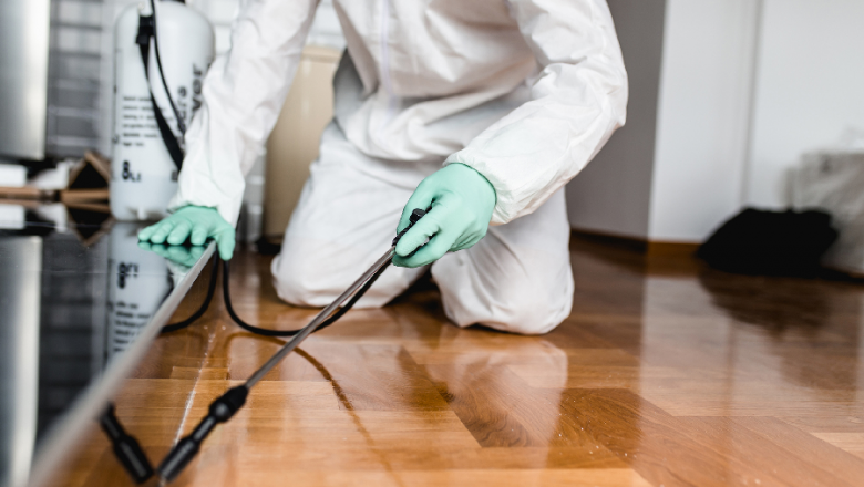 How To Choose Pest Control Experts