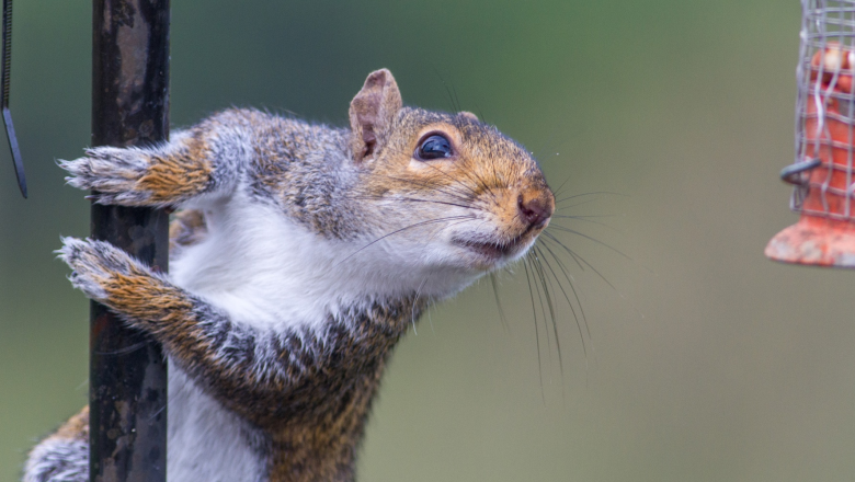 Squirrel Rodent Control – Cut Off Access Points, Lay Traps, And Adopt Prevention Techniques