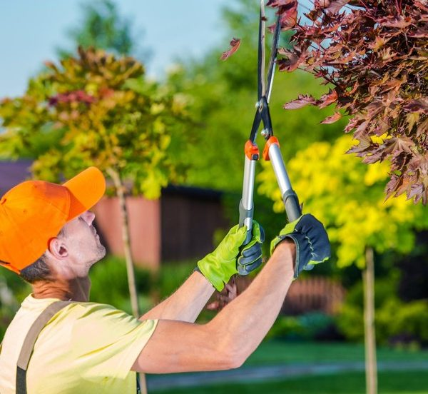 Why Should One Engage In Tree Trimming Las Vegas?