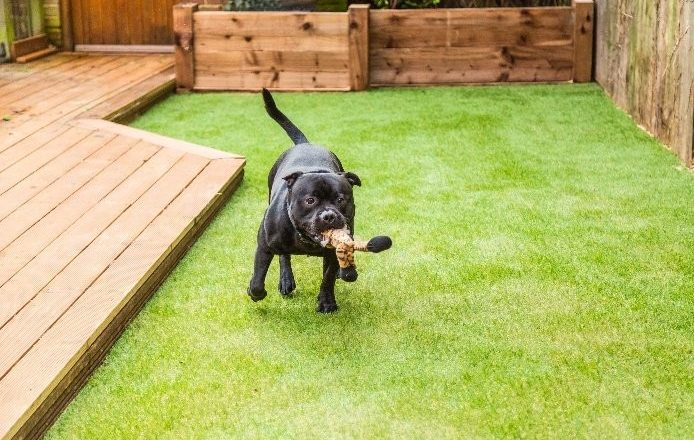 5 tips to choose the best artificial grass for dogs