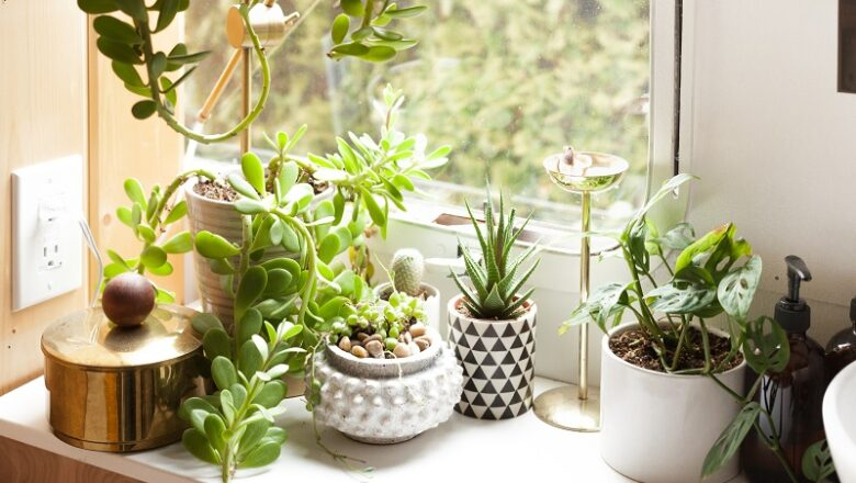Buy Succulent Plants Online at a Reasonable Rate